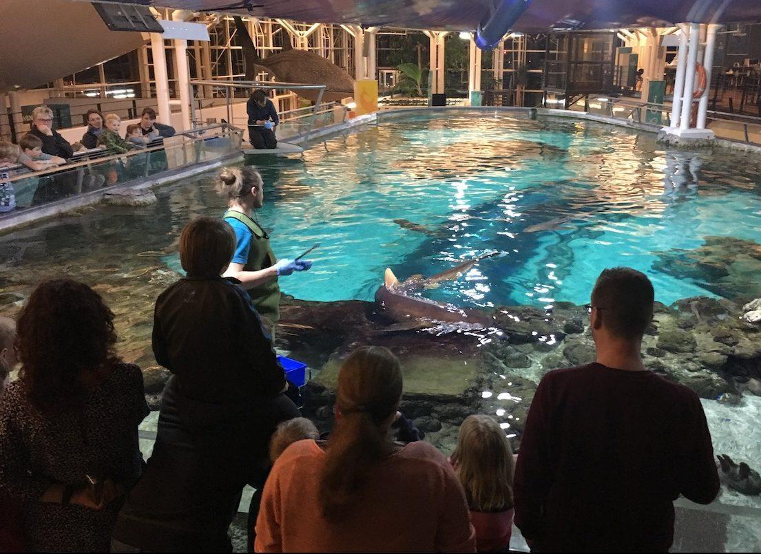 Oplev havets dyr i Kattegatcenteret som kunde hos Djurslands Bank. Håndter dine arrangementer igennem billetsystemet fra Safeticket